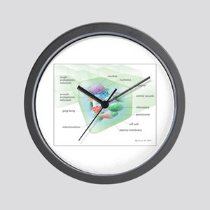 Plant Cell Wall Clock