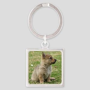 Swedish Vallhund Pup 9Y165D-131 Square Keychain