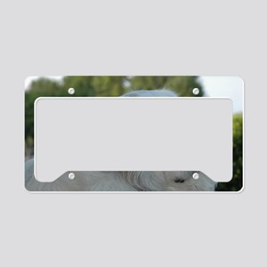 Great Pyr License Plate Holder