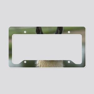 llama_laptop License Plate Holder