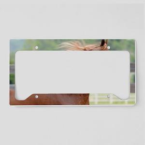 Skin 1 License Plate Holder