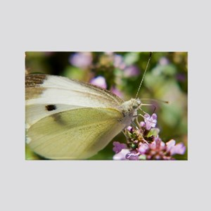 butterfly-butterfly-bush Rectangle Magnet