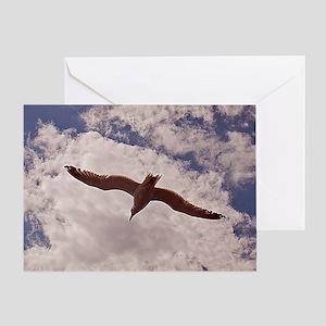 seagull-1 Greeting Card