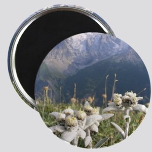edelweiss mountains Magnet