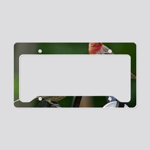 House Finches License Plate Holder