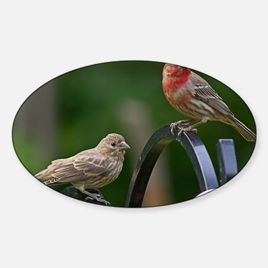 House Finches Sticker (Oval)