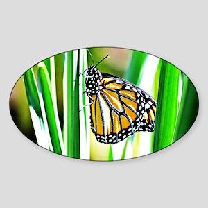 Sweet Monarch Butterfly Sticker (Oval)