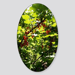 Currant Berries Sticker (Oval)