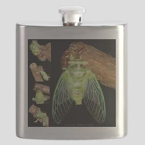 cicadas_emerging_c2011_terry_lynch Flask