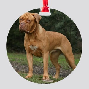 Dogue de Bordeaux 9Y201D-193 Round Ornament