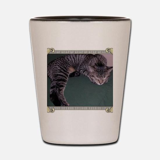Napping Cat-Scroll-M Shot Glass