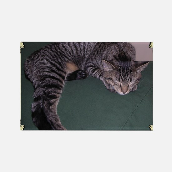 Napping Cat-Scroll-M Rectangle Magnet
