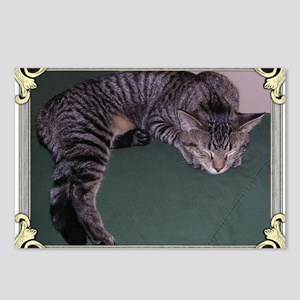 Napping Cat-Scroll-M Postcards (Package of 8)