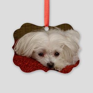 MalteseGCard Picture Ornament