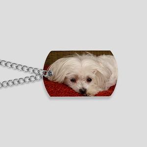 MalteseGCard Dog Tags