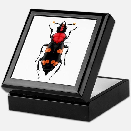 Amer. Burying Beetle Keepsake Box