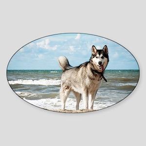 siberian-husky-dog-on-beach Sticker