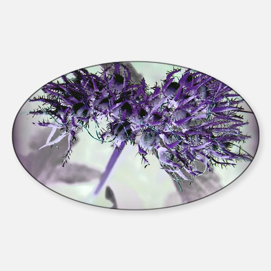Purple Passion Sticker (Oval)
