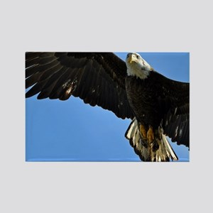 Majestic Bald Eagle Rectangle Magnet