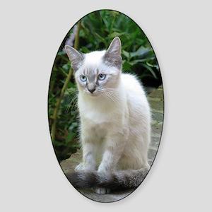 Blue Eyed Kitten oval mat.p... Sticker (Oval)