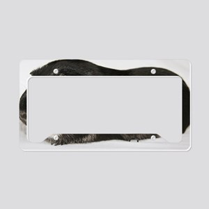 Black Fox License Plate Holder