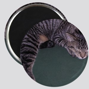Napping Cat-WR Magnet