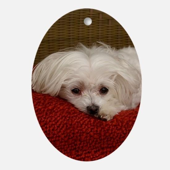 MalteseJournal Oval Ornament
