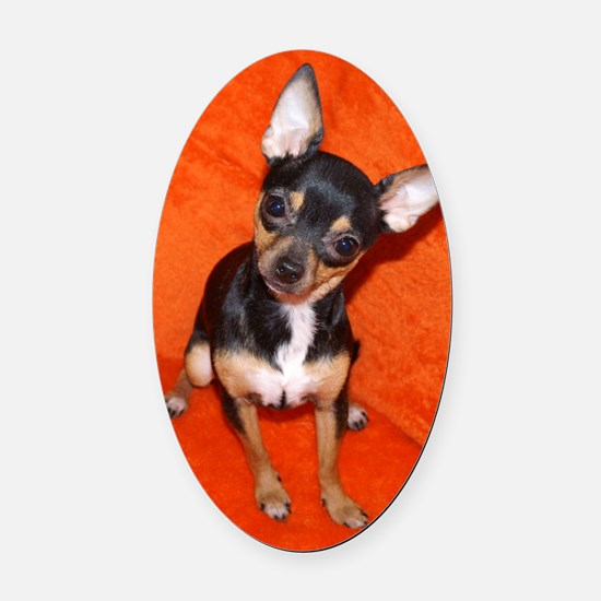 ChihuahuaJournal Oval Car Magnet