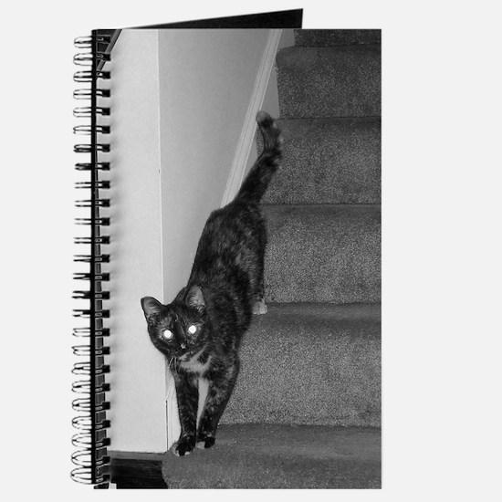 Cat D-BW-M Journal
