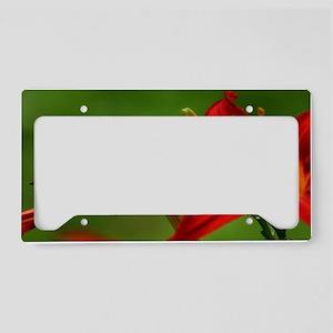 Dragonfly framed print License Plate Holder