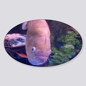 fish picture Sticker (Oval)