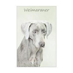 Weimaraner Posters