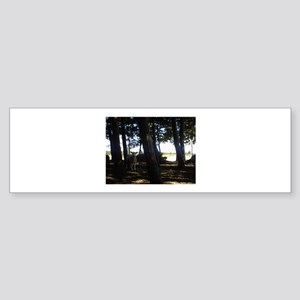 Sheep in Wood Bumper Sticker