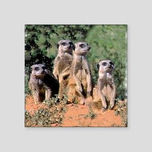 "MEERKAT FAMILY PORTRAIT sta Square Sticker 3"" x 3"""