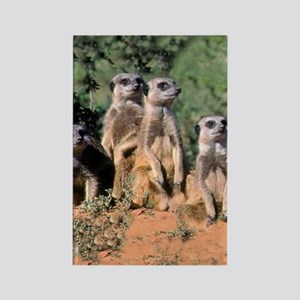 MEERKAT FAMILY PORTRAIT stadium b Rectangle Magnet