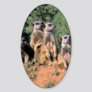 MEERKAT FAMILY PORTRAIT stadium bla Sticker (Oval)