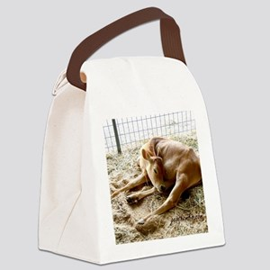 Sleeping calf Canvas Lunch Bag