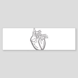 human-heart-blood-circulation-circa Bumper Sticker