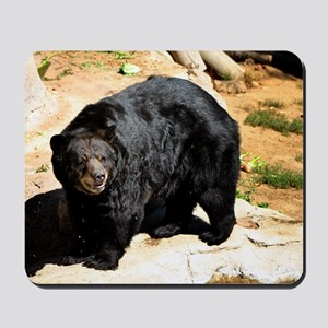 American Black Bear 3 Mousepad