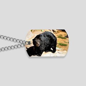 American Black Bear 3 Dog Tags