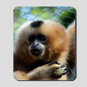Golden-Cheeked Gibbon eatting 3 Mousepad