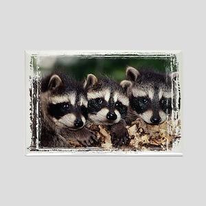 3 Raccoons Rectangle Magnet
