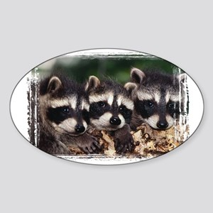 3 Raccoons Sticker (Oval)