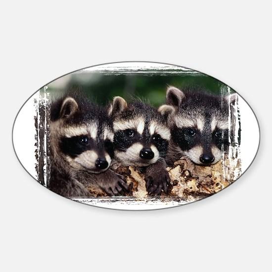 3 Raccoons Sticker (Oval)