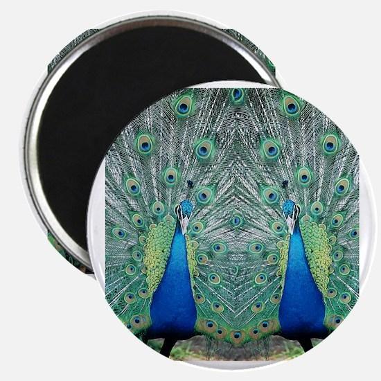 peacockflips Magnet