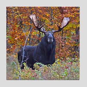 Big bull moose Tile Coaster