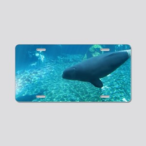 Beluga Whale Calf swimming Aluminum License Plate