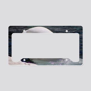 Close up of a Beluga Whale License Plate Holder