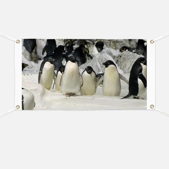 Group of Adelie Penguins Banner