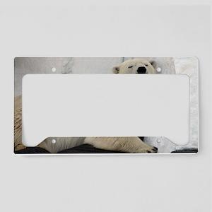 Polar Bear looking sleepy 2 License Plate Holder